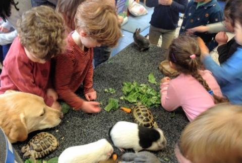 Furry visitors in Nursery