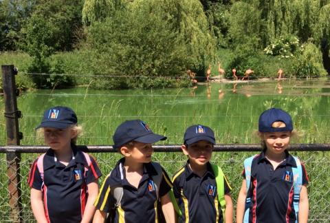 Reception go to Whipsnade!