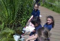 Pupil Report: Form 2 at the Ecology Centre
